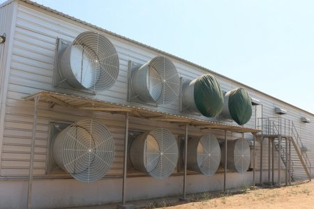 Automatic Broiler equipment with Poultry farm house design