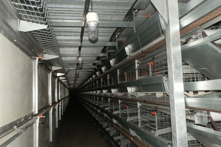 H type Layer cage equipment in prefab chciken house