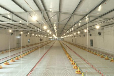 Chicken farm equipment (2houses /150ft*50ft 2.0kg -- 6,000pcs )