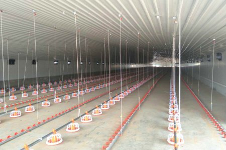 Chicken farm euipment