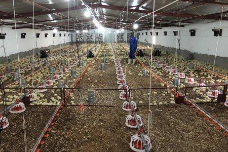 Chicken farm equipment (2 houses /120*15*2.5 meter 2.0kg -- 28,000pcs)