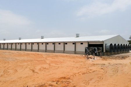 Steel Structure Poultry Breeding Houses
